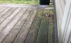 Burnaby Pressure Washing dirty deck