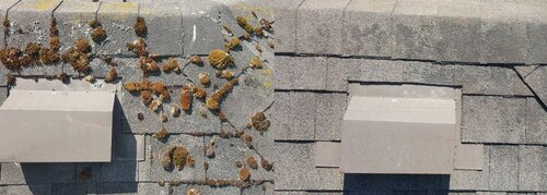 Burnaby Pressure Washing roof cleaning before and after 2